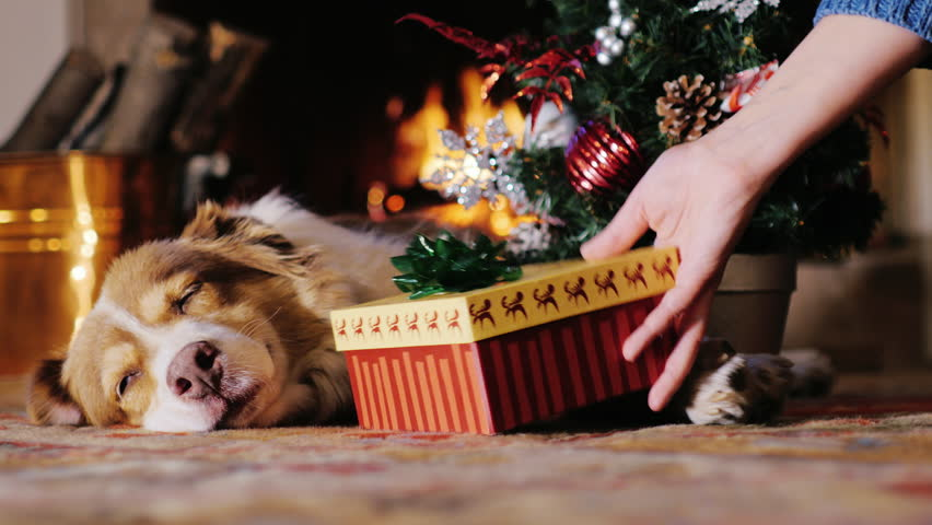 The dog lies near a Christmas tree on the background of a burning fireplace. The dog is a symbol of the coming 2018