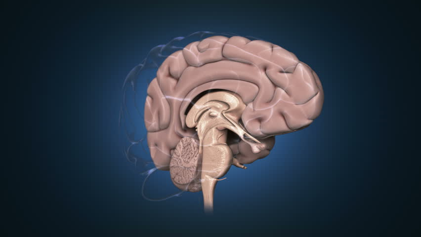 Stock Video Of Animation Of Human Brain In Rotation 17099473