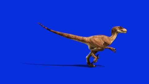 Dinosaurs Velociraptor Run Side Jurassic World Prehistory Blue Screen