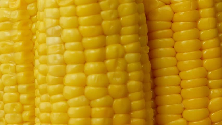 Corn closeup  | Shutterstock HD Video #2286221