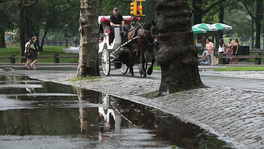 New York - Circa 2009: Central Park in 2009. Horse-drawn carriage on a rainy day in Central Park, New York City, New York.