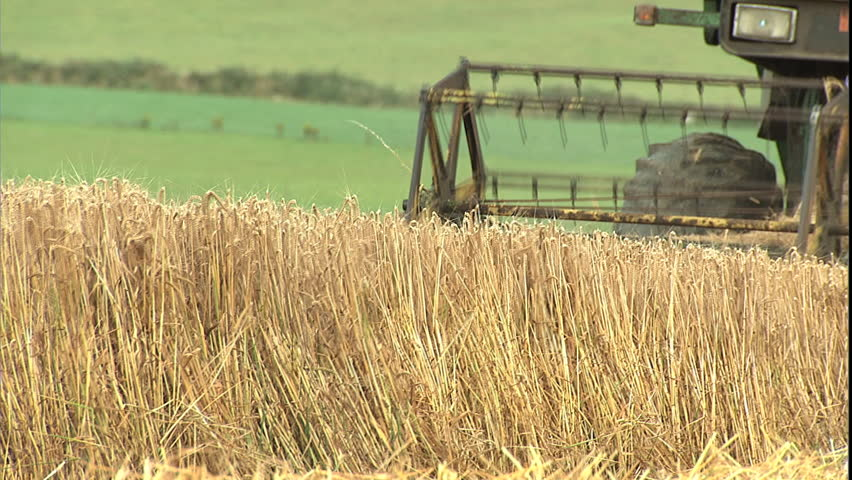 Wheat Heads and Combine Head Stock Footage Video (100% Royalty-free)  2312351 | Shutterstock