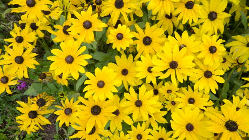 4k yellow wedding background wildflower flowers plants bloom