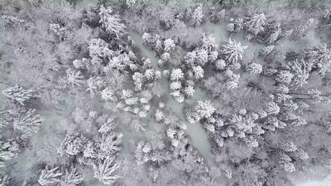 Top down aerial view of snowy trees crossing a stream