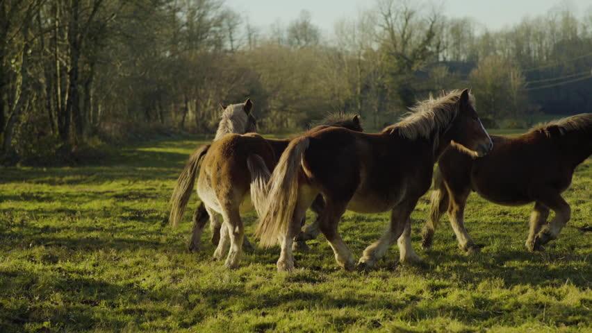 Amazing Horses running 4k | Shutterstock HD Video #23353051