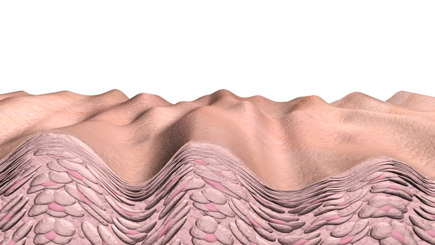 Skin aging  animation showing a cross section of skin and cells with aging effects or in reverse the reverse aging effects. This is an artistic simulation.  | Shutterstock HD Video #233791