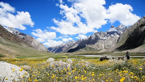 Yellow flower field with selective focused with sunny day background snow moutain Himalaya and blue sky, Kashmir, India, Selective focus and motion blur