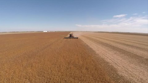 Aerial drone flying over a combine in a gold wheat field during harvest in Saskatchewan, Canada.