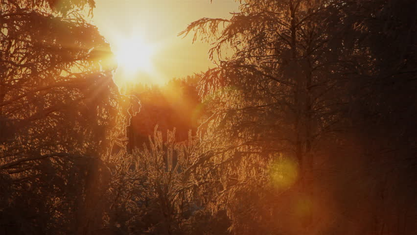 Light of the sun through the branches of a frozen trees. Shot on Full HD camera.