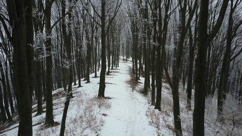 Aerial drone footage through a foggy winter forest moving forward
