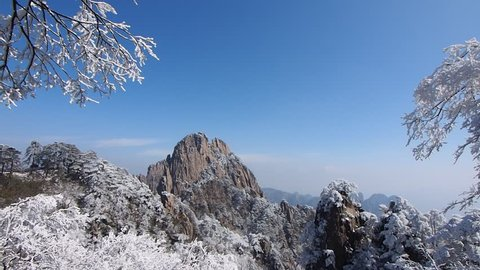 Huangshan national park after snow (Yellow Mountain), the twigs covered with snow sway in the wind,  Anhui Province, China.