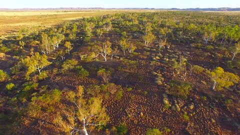 Aerial footage of a riverbed lined with ghost gums curving it's way through the Pilbara region of Western Australia, Australia.