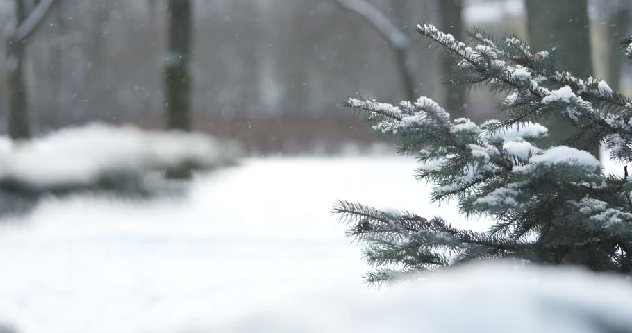 Slow motion fir branches in morning snowfall with sunlight, 4k 60fps prores footage | Shutterstock HD Video #24117241