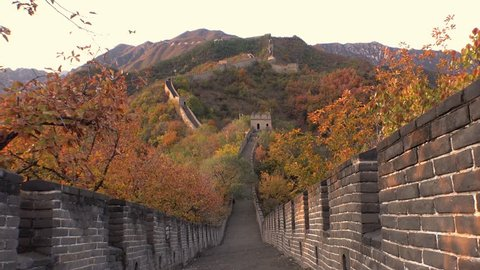 The Great Wall of China. Majestic mountain vista. Beijing Mutianyu. Ancient historic site. Autumn orange sunset, yellow green tree. Forward pass gimbal walk symmetry