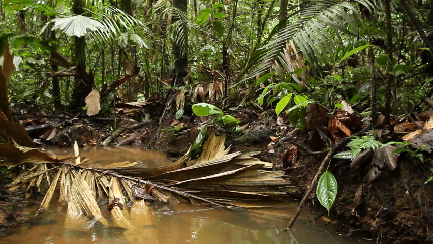 Walking along a rainforest stream in the Ecuadorian Amazon