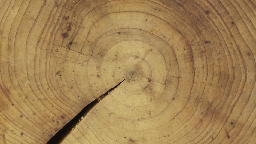 Close-up of a cross-section of a tree trunk, rotation, isolated on a green screen. | Shutterstock HD Video #24328592