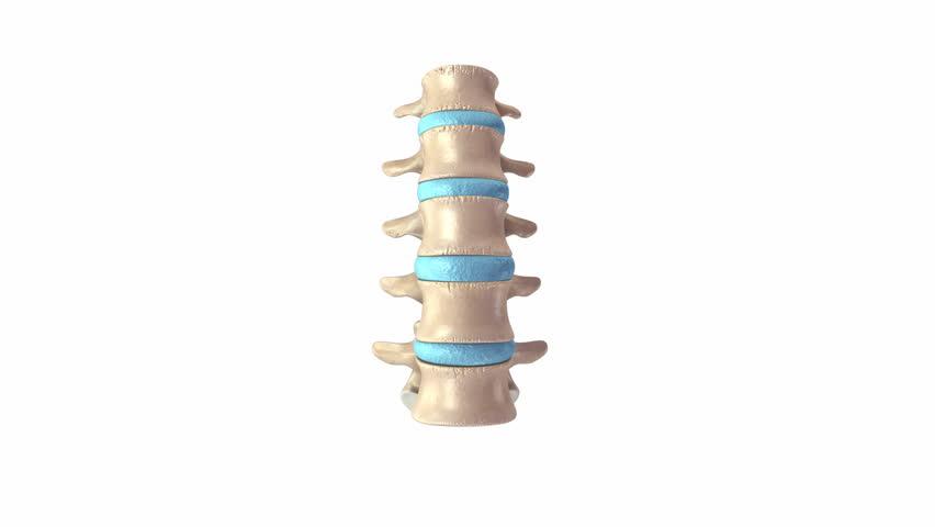 Header of spine