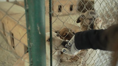 Sad puppies dogs in shelter behind fence waiting to be rescued and adopted to new home. Cute puppy seeking attention in a dog sanctuary.