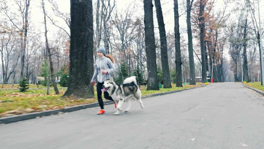 Footage of young girl running with her dog, alaskan malamute, outdoor at autumn or winter. Mourning jogging. Domestic pet. Husky. Guide-dog