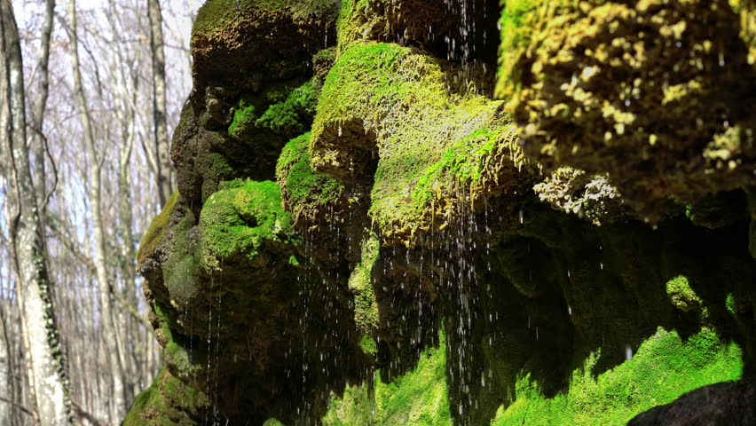 Spring water as it falls from mossy rock and dribbles on green moss. Water drops falls like a silver rain. Natural pure spring water source. 4k UHD | Shutterstock HD Video #24687161