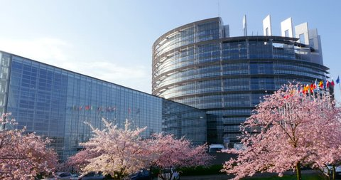 Cherry blossom sakura tree in bloom on a warm spring day with all European Union fags waving peacefully in front of the European Parliament in Strasbourg, France reflection in glass fa\xE7ade