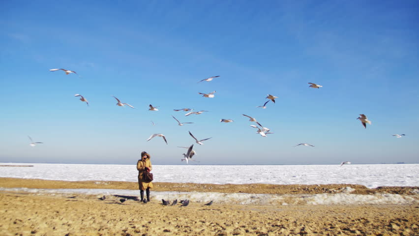 Woman feeds the hungry seagulls flying over the frozen sea. One girl in winter coat, standing on the shore, seagulls bread rolls and food on the background of a winter sea covered by ice and snow | Shutterstock HD Video #24899921
