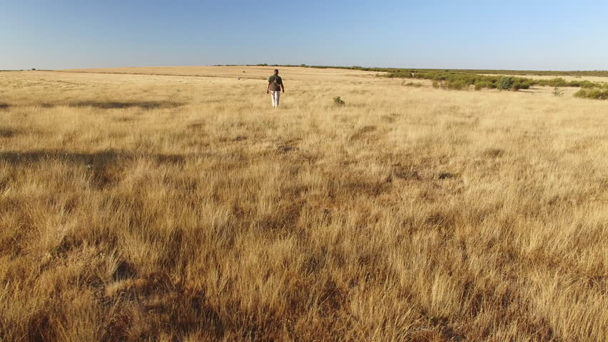 Rotating camera over pointer pedigree dogs running and hunter in summer