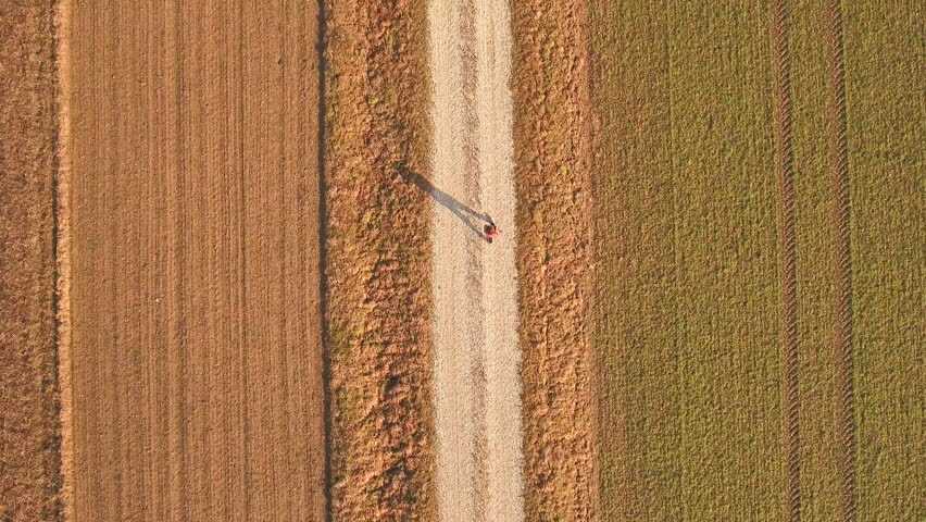 Over head view of person walk between empty fields 4K. Drone shot of single person in middle of frame with farm fields beside. Bird's eye view. Sunny day with long person shadow.
