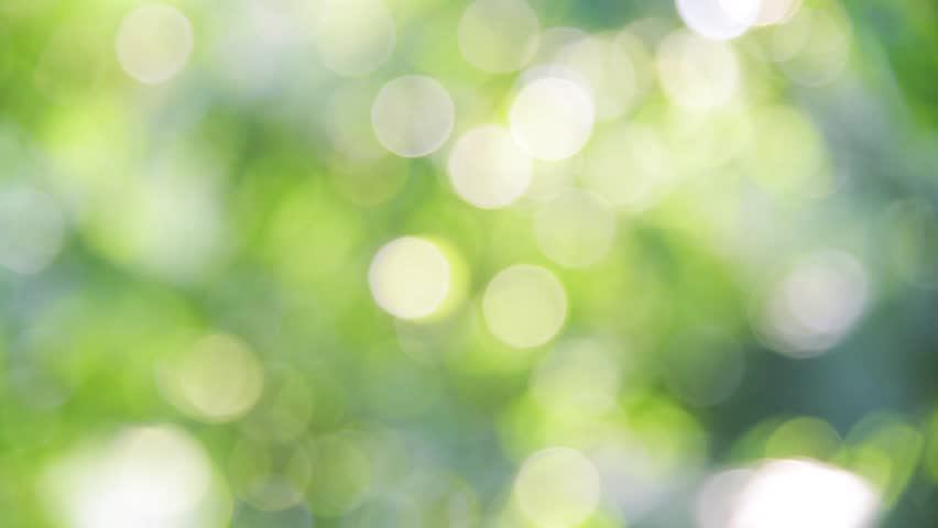 Sunlight shining through the leaves of trees, natural blurred background, Nature abstract background, nature green bokeh  | Shutterstock HD Video #25137950