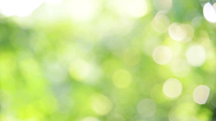 Sunlight shining through the leaves of trees, natural blurred background, Nature abstract background, bokeh background