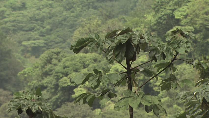 Canopy of the Amazon Rainforest