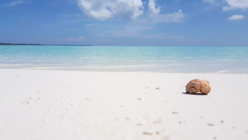 v01853 Maldives beautiful beach background white sandy tropical paradise island with blue sky sea water ocean 4k hermit crab