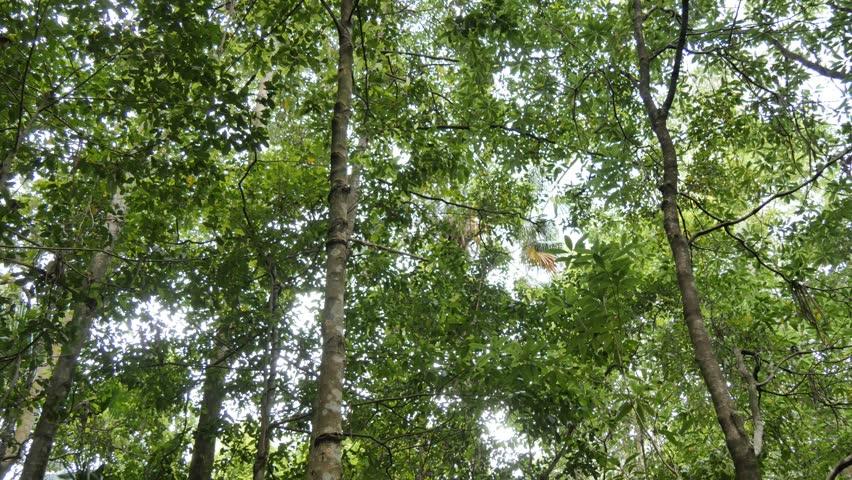 Temperate Rainforest Australian Landscape   Shutterstock HD Video #25760441