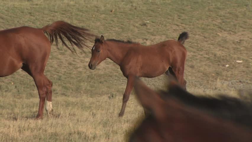 A Colt Walking In A Field | Shutterstock HD Video #2583071