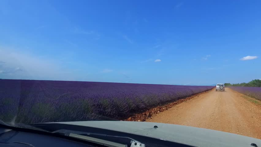 Off-road car rides on country road through Lavender fields in Provence, France  - POV shot  Romans called this area Provincia Romana evolved in Provence