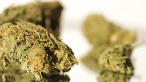 Macro shot of medical marijuana medical cannabis THC