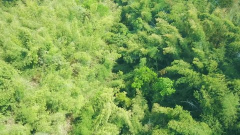 Aerial shot with from a drone. Flying over bamboo forest in Thailand