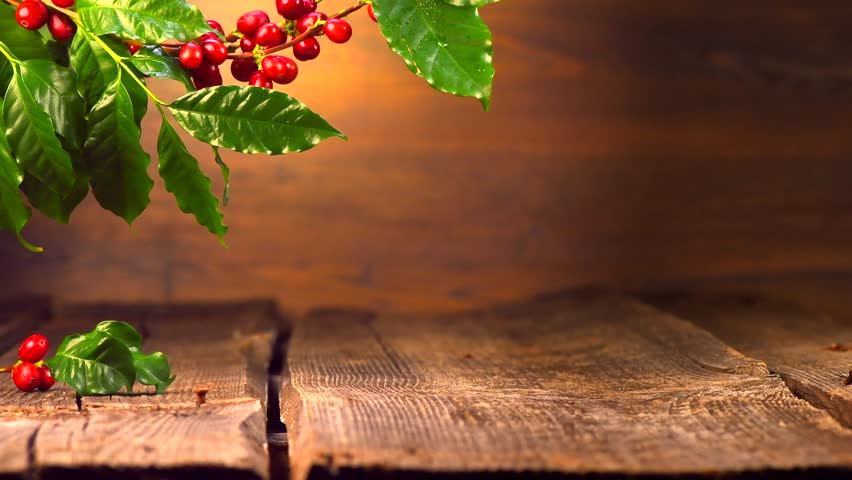 coffee background real coffee plant on wooden table