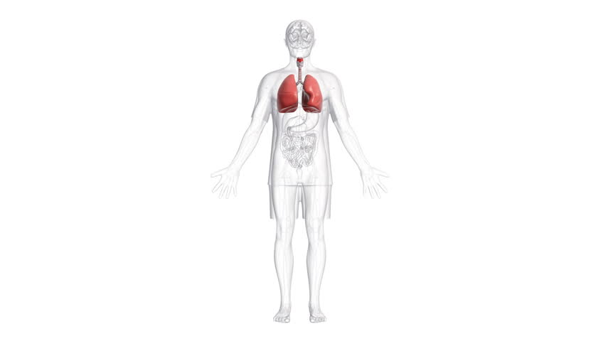 Animation Of Scanning Human Anatomy Showing Ill Lungs