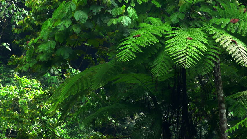 Rainforest plants and trees list