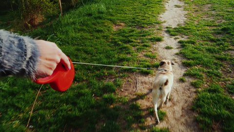 A woman digs up a dog - a favorite pug. Walking in the forest or park along the path the dog runs on a leash. Steadicam pov video