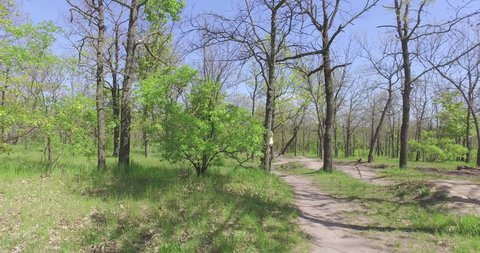 Walk morning in park among trees man on bicycle Weimaraner with dog