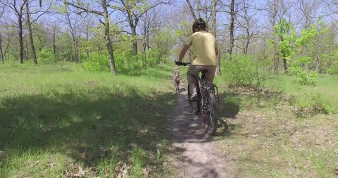 Mature man on bicycle rides with dog in morning forest on bicycle