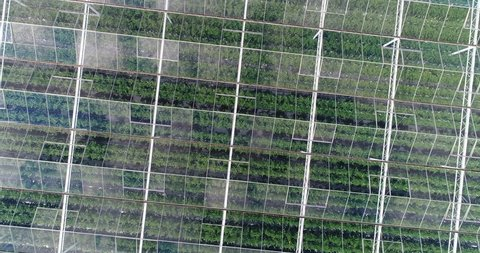 Aerial or top shot above a greenhouse. Organic cultivation of natural and fresh vegetables.