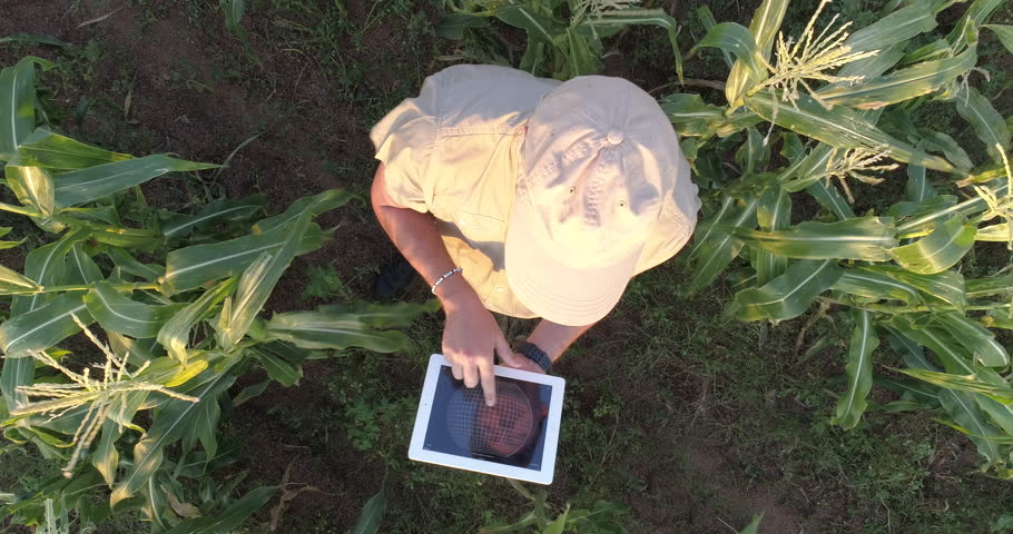 4K aerial view directly above a farmer monitoring his corn crop with a tablet #26483111