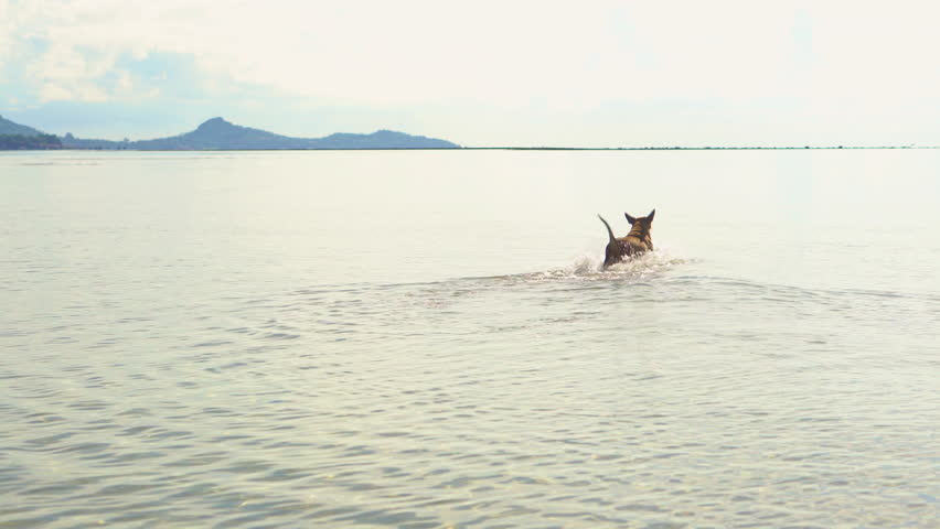 Happy dog runs on the sea | Shutterstock HD Video #26633851