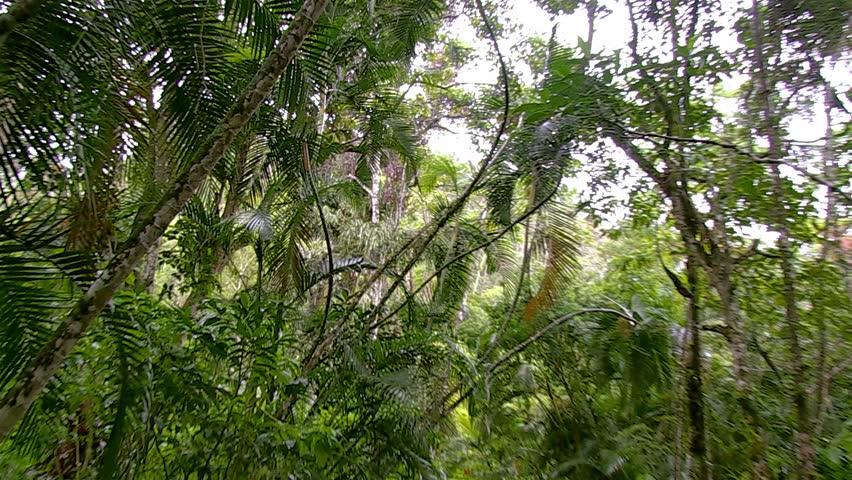 Header of Plantae