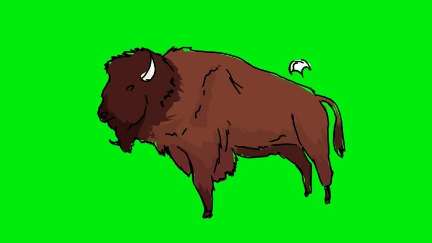 Hand-drawn buffalo on a green screen   Shutterstock HD Video #26681911