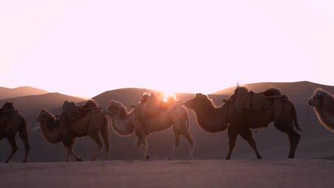 Camel Caravan Train Passing the Gobi Desert