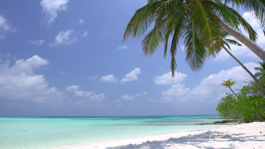 Tropical pristine beach with coconut palm and turquoise water, Maldives travel destination  | Shutterstock HD Video #26812321
